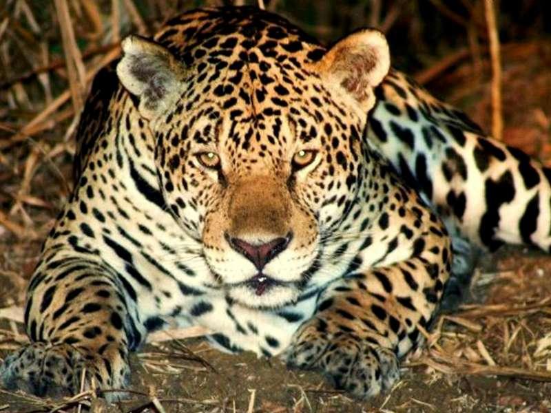 Pantanal_2013-Foto-Marcos-Vergueiro-SECOM-MT