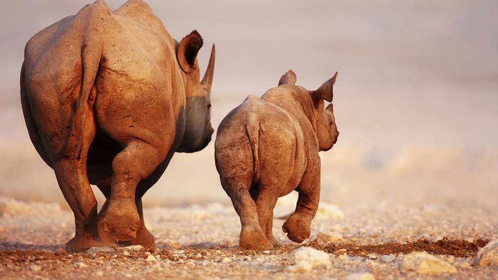 namibie_rhinoceros_johanswanepoel_fotolia_2