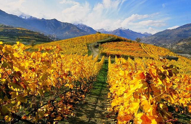 Vignoble Val d'Aoste