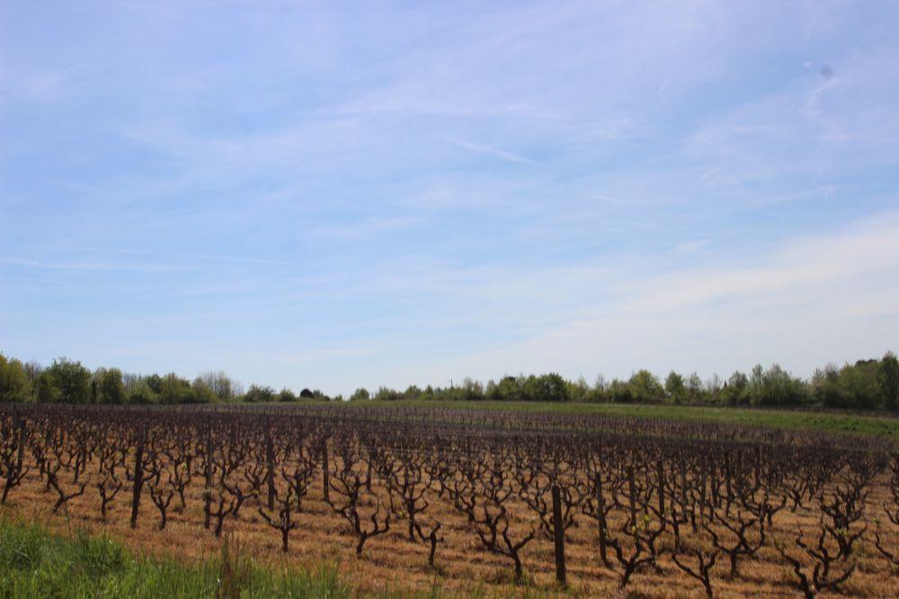 Vignes Loire